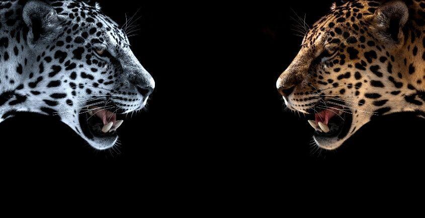 leopar ve jaguar